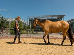Enjoy Work - Temporary Round Pen - Chiswick Park